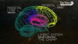 Limbikus rendszer fontossága az érzelmek és a viselkedés szervezésében.